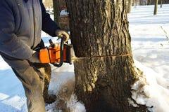 Περιορίστε το δέντρο με ένα αλυσιδοπρίονο στοκ εικόνα με δικαίωμα ελεύθερης χρήσης