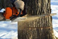Περιορίστε το δέντρο με ένα αλυσιδοπρίονο στοκ εικόνες