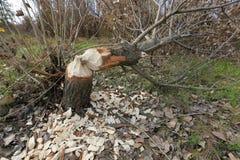 Περιορίστε το δέντρο στοκ φωτογραφία