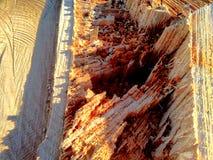 Περιορίστε το κολόβωμα δέντρων Στοκ Φωτογραφία