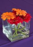περιορισμένα λουλούδι&alph Στοκ φωτογραφίες με δικαίωμα ελεύθερης χρήσης
