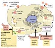 Περιοχές της δράσης των ενάντών στον ιό φαρμάκων απεικόνιση αποθεμάτων