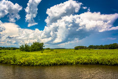 Περιοχή έλους του ποταμού Tomoka, στο κρατικό πάρκο Tomoka, Φλώριδα στοκ εικόνα με δικαίωμα ελεύθερης χρήσης