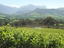 Περιοχή κρασιού της Νότιας Αφρικής Στοκ εικόνες με δικαίωμα ελεύθερης χρήσης