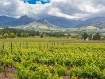 Περιοχή κρασιού - Franschhoek - αμπελώνες με τα δραματικά βουνά και ουρανός στο υπόβαθρο γύρω από Franschhoek στοκ εικόνα με δικαίωμα ελεύθερης χρήσης