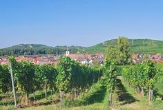 Περιοχή κρασιού Kaiserstuhl, μαύρο δάσος, Γερμανία στοκ φωτογραφίες