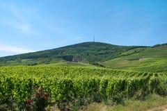 Περιοχή κρασιού Tokaj, της Ουγγαρίας Στοκ Εικόνες