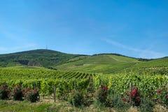 Περιοχή κρασιού Tokaj, της Ουγγαρίας Στοκ φωτογραφία με δικαίωμα ελεύθερης χρήσης