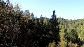 Περιοχή κρατικής αναψυχής κολπίσκου του Ώστιν - όχι καθημερινά μπορείτε να το ακούσετε στο δάσος μουσική απόθεμα βίντεο