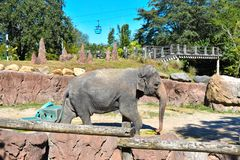 Περιοχή κόλπων atTampa περπατήματος ελεφάντων της Νίκαιας στοκ φωτογραφία