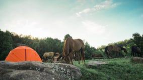 Περιοχή στρατοπέδευσης με τα άλογα Στοκ εικόνες με δικαίωμα ελεύθερης χρήσης