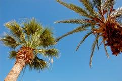 Περιοχή τουριστών καλοκαιριού στην Τυνησία Στοκ εικόνα με δικαίωμα ελεύθερης χρήσης