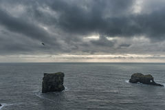 Περιοχή Dyrholaey στην Ισλανδία Κοντά στη μαύρη παραλία άμμου Ανατολή Πετώντας πουλί και βράχος στο υπόβαθρο Στοκ Εικόνες
