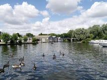 Περιοχή Wroxham, Norfolk Broads, με τις πάπιες στο νερό Στοκ Εικόνες
