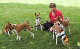 περιπατητής σκυλιών Στοκ Φωτογραφίες