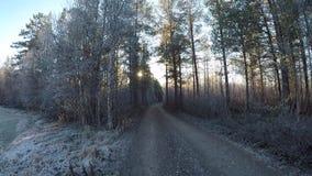 Περιπλάνηση σε έναν κρύο παγωμένο δασικό βρώμικο δρόμο που περιβάλλεται από τα δυνατά δέντρα πεύκων στην ηλιοφάνεια ξημερωμάτων σ απόθεμα βίντεο