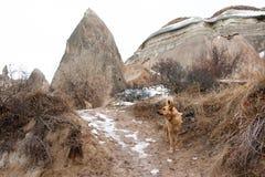 Περιπλανώμενα σκυλιά στα βουνά Στοκ Φωτογραφίες