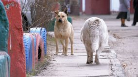 Περιπλανώμενα σκυλιά στην οδό στην πόλη φιλμ μικρού μήκους