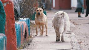Περιπλανώμενα σκυλιά στην οδό στην πόλη απόθεμα βίντεο
