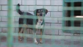 Περιπλανώμενα σκυλιά στο καταφύγιο απόθεμα βίντεο