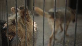 Περιπλανώμενα σκυλιά στο καταφύγιο φιλμ μικρού μήκους