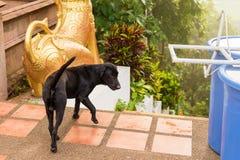 Περιπλανώμενα σκυλιά στο ναό Ταϊλάνδη στοκ εικόνες με δικαίωμα ελεύθερης χρήσης