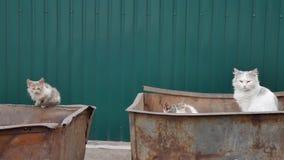 Περιπλανώμενες γάτες αλεών σε ένα δοχείο απορριμάτων στη μεγάλη πόλη απόθεμα βίντεο