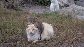 Περιπλανώμενες γάτες αλεών στη μεγάλη πόλη Η γάτα που αποκτάται στο δεύτερο απόθεμα βίντεο
