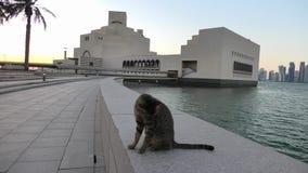 Περιπλανώμενη γάτα κόλπων Doha στο ηλιοβασίλεμα απόθεμα βίντεο