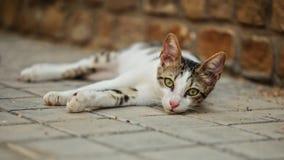 Περιπλανώμενη γάτα που βρίσκεται στο έδαφος, κεφάλι ελαφρώς επάνω, περίεργη να εξετάσει κάμερα, να γοητεύσει μάτια στοκ φωτογραφίες