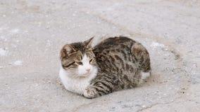 Περιπλανώμενη γάτα που στηρίζεται στην επιφάνεια ασφάλτου της οδού φιλμ μικρού μήκους
