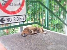 Περιπλανώμενη γάτα ύπνου Στοκ εικόνα με δικαίωμα ελεύθερης χρήσης