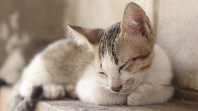 Περιπλανώμενος ύπνος γατών στον τοίχο φιλμ μικρού μήκους