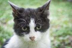 περιπλανώμενο ανεπαρκές γατάκι Στοκ Εικόνες