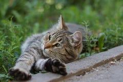Περιπλανώμενο γατάκι σε μια χλόη στοκ εικόνα