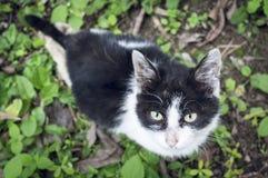Περιπλανώμενο γατάκι Στοκ εικόνα με δικαίωμα ελεύθερης χρήσης