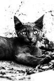 Περιπλανώμενο μαύρο γατάκι Στοκ Φωτογραφίες