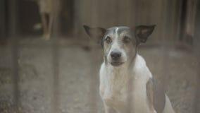 Περιπλανώμενο σκυλί ή εγκαταλειμμένο σκυλί στο κλουβί απόθεμα βίντεο