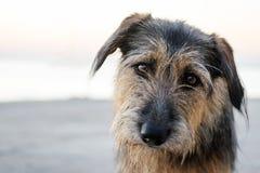 Περιπλανώμενο σκυλί με τα λυπημένα μάτια Άστεγα ζώα Φροντίδα για τα ζώα διάστημα αντιγράφων στοκ εικόνα