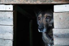 Περιπλανώμενο σκυλί σε ένα ξύλινο κιβώτιο στοκ εικόνες