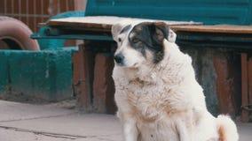Περιπλανώμενο σκυλί στην οδό στην πόλη φιλμ μικρού μήκους