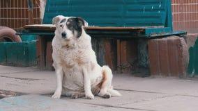 Περιπλανώμενο σκυλί στην οδό στην πόλη απόθεμα βίντεο