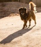 Περιπλανώμενο σκυλί στο δρόμο στην πόλη Στοκ Φωτογραφίες
