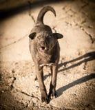 Περιπλανώμενο σκυλί στο δρόμο στην πόλη Στοκ φωτογραφίες με δικαίωμα ελεύθερης χρήσης