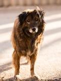 Περιπλανώμενο σκυλί στο δρόμο στην πόλη Στοκ εικόνα με δικαίωμα ελεύθερης χρήσης