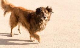 Περιπλανώμενο σκυλί στο δρόμο στην πόλη Στοκ φωτογραφία με δικαίωμα ελεύθερης χρήσης