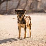 Περιπλανώμενο σκυλί στο δρόμο στην πόλη Στοκ Εικόνες