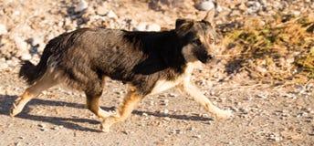 Περιπλανώμενο σκυλί στο δρόμο στην πόλη Στοκ εικόνες με δικαίωμα ελεύθερης χρήσης