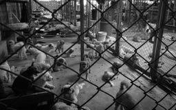 Περιπλανώμενο σκυλί στοκ φωτογραφία με δικαίωμα ελεύθερης χρήσης