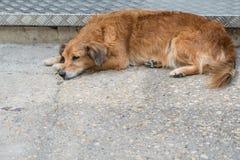 Περιπλανώμενο σκυλί υπαίθρια στοκ εικόνες με δικαίωμα ελεύθερης χρήσης